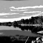 Les cyanobactéries de la baie Missisquoi