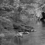 Zones humides, zones oubliées – humeur aqueuse