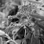 Périple floral