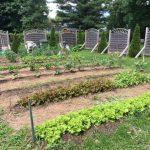 Un jardin collectif à l'OMH
