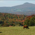 Nouvelle entente de conservation de 79 hectares au mont Pinacle