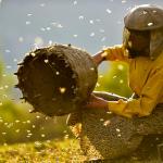 Le Royaume des abeilles (Honeyland)