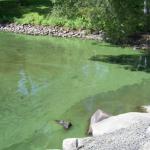 Réparer la baie Missisquoi