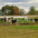 Les producteurs agricoles inégalement frappés