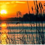 Des efforts qui rapportent au lac Selby