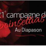 La 21e édition de la campagne de poinsettias Au Diapason est de retour!